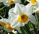 מידעון למטפלים בפרחי באך מס' 4 מאי 2006